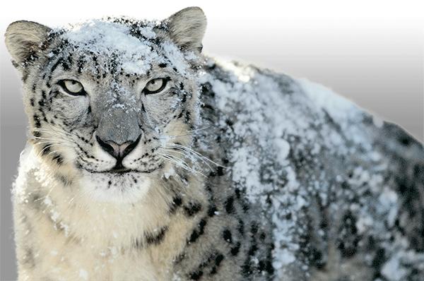 MacOS 10.6 Mac OS X Snow Leopard